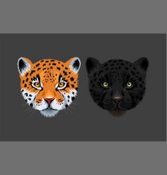 Black panther and jaguar vector