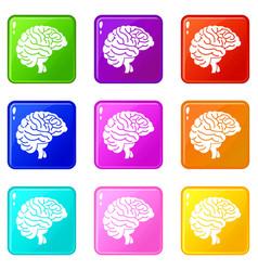 Brain set 9 vector