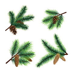fir branch christmas tree branches with cones vector image