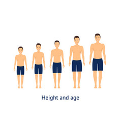 Height and age stage of growth from boy to man vector