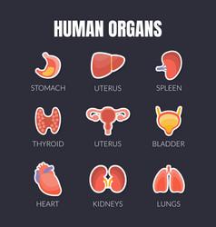 human organs banner template with internal organs vector image