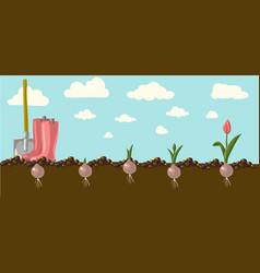 tulip vector image