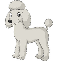 Cartoon poodle dog isolated on white background vector