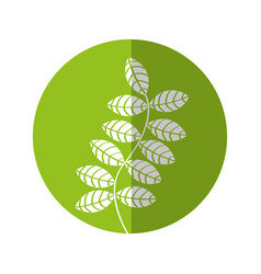Leafs plant decorative icon vector