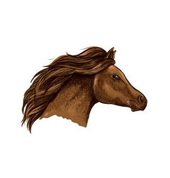 Sketched brown horse for equestrian design vector image