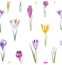 watercolor crocus floral pattern vector image