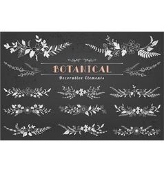 Botanical Decorative Elements vector image vector image