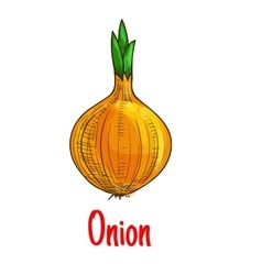 Bulb onion vegetable sketch isolated icon vector image