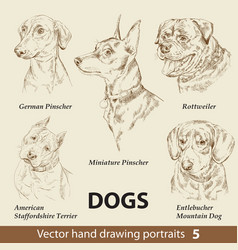 set hand drawing dogs 5 vector image