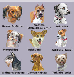 set of portraits of dog breeds-3 vector image