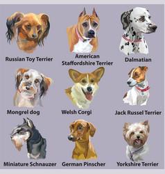 Set portraits dog breeds-3 vector