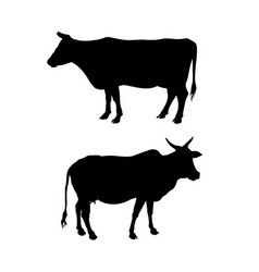 Silhouettes of a standing cow vector