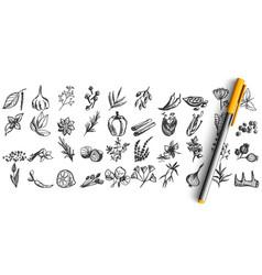 spices doodle set vector image