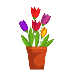 tulip flower in pot isolated on white background vector image