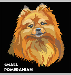 colored small pomeranian vector image