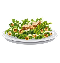 Salad caesar with croutons vector