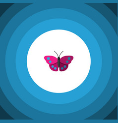 Isolated violet wing flat icon archippus vector