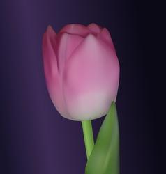 Realistic tulip vector image vector image