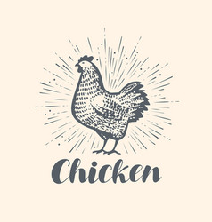 chicken logo or label farm animal sketch vintage vector image