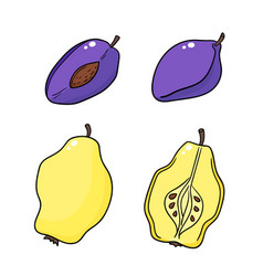 quinces and plums isolated on white background vector image