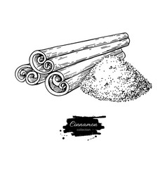 Cinnamon stick and powder drawing hand vector