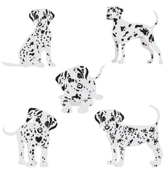 Dalmatians cute sad vector