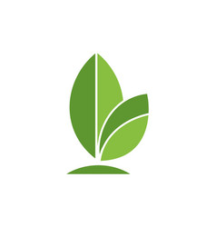 green leaves logo icon vector image