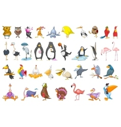 Set of various birds vector
