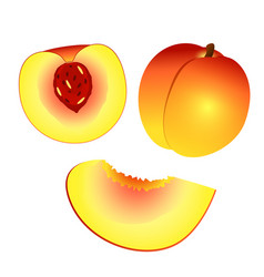 yellow orange peach and half peach and slice vector image