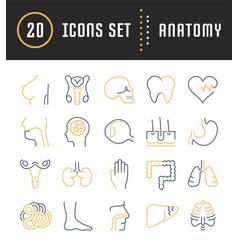 Set flat line icons anatomy vector