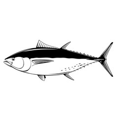 Bluefin tuna fish black and white vector