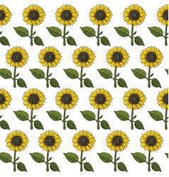 seamless natural colorful bright sunflower pattern vector image
