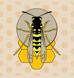wasp on honeycombs vector image