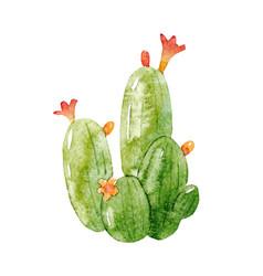Watercolor cactus vector
