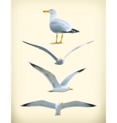 Seagulls icons vector image vector image