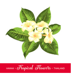 wedding garland with tropical flowers vector image vector image