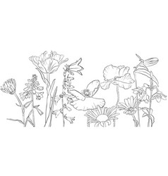 Drawing poppy flowers vector