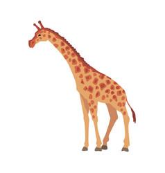 Giraffe wild african animal side view cartoon vector
