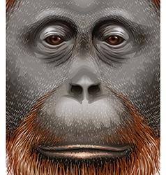 An orangutan vector