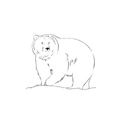 black and white realistic drawing a bear vector image