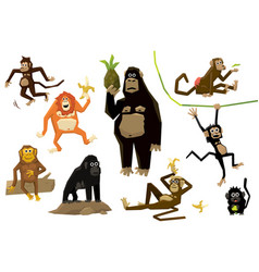 funny monkey set monkeys of various breeds in vector image