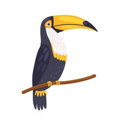 Toucan tropical parrot beautiful bird with blackk vector