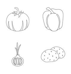 yellow pumpkin sweet red pepper onion bitter vector image vector image