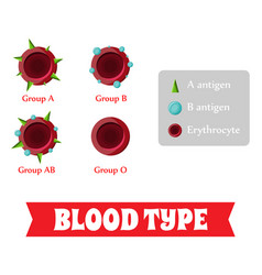 blood group blood type vector image
