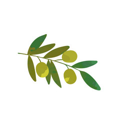 cartoon branch of olive tree with green leaves vector image