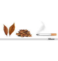 dry tobacco leaves with cigarette vector image