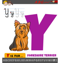 Letter y from alphabet with cartoon yorkshire vector