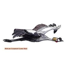 flying african crowned crane bird vector image