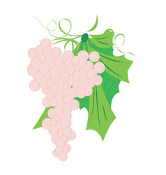 bunch of grapes on a white background vector image