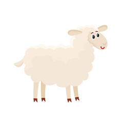 well gromed fluffy sheep lamb with big eyes vector image